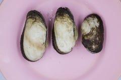 Μαλάκιο κιβωτών Arcidae στο ρόδινο πιάτο στοκ φωτογραφίες