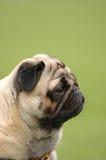 μαλαγμένος πηλός σκυλιών Στοκ Φωτογραφίες