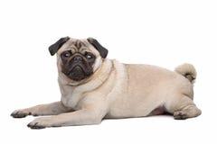 μαλαγμένος πηλός σκυλιών Στοκ Εικόνες