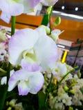 Μαλακά εστίασης λουλούδια ορχιδεών άνθισης όμορφα στη φυσική πλάτη κήπων Στοκ Εικόνες