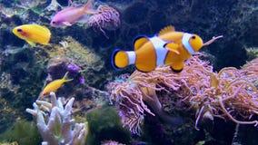 Μαλακά και σκληρά κοράλλια, βαθύς υποβρύχιος κόσμος απόθεμα βίντεο