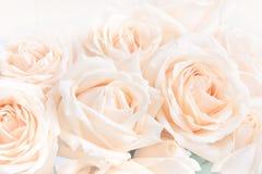Μαλακά πλήρη φγμένα λεπτά τριαντάφυλλα ως ουδέτερο υπόβαθρο Εκλεκτική εστίαση στοκ φωτογραφία
