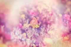 Μαλακή εστίαση σε λίγη πεταλούδα στο κίτρινο λουλούδι Στοκ Φωτογραφίες