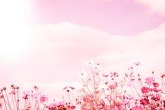 Μαλακή θαμπάδα των λουλουδιών κόσμου Στοκ εικόνα με δικαίωμα ελεύθερης χρήσης