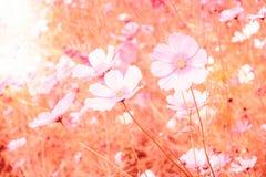 Μαλακή θαμπάδα των λουλουδιών κόσμου Στοκ φωτογραφία με δικαίωμα ελεύθερης χρήσης