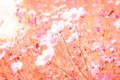 Μαλακή θαμπάδα των λουλουδιών κόσμου Στοκ εικόνες με δικαίωμα ελεύθερης χρήσης