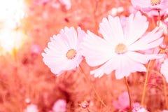 Μαλακή θαμπάδα των λουλουδιών κόσμου Στοκ Εικόνες