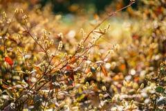 Μαλακός ελαφρύς τόνος και μαλακή εστίαση του αφηρημένου πνεύματος υποβάθρου φύσης Στοκ Φωτογραφίες