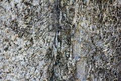 Μαλακός φλοιός δέντρων τροπικών δασών εστίασης στοκ φωτογραφίες με δικαίωμα ελεύθερης χρήσης