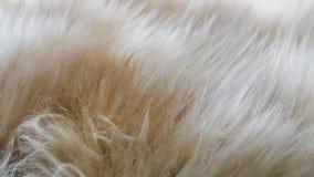 Μαλακότητα του μαλλιού Στοκ Φωτογραφία