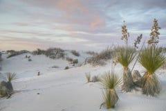 Μαλακό άσπρο yucca άμμων στοκ εικόνα με δικαίωμα ελεύθερης χρήσης