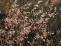 Μαλακό υπόβαθρο των λουλουδιών σανού Στοκ Φωτογραφίες