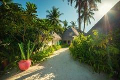 Μαλδίβες, εξωτικός προορισμός για τις διακοπές ή μήνας του μέλιτος, άσπρη παραλία κοραλλιών με τους φοίνικες στον παράδεισο στοκ εικόνες με δικαίωμα ελεύθερης χρήσης