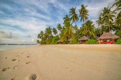Μαλδίβες, εξωτικός προορισμός για τις διακοπές ή μήνας του μέλιτος, άσπρη παραλία κοραλλιών με τους φοίνικες στον παράδεισο στοκ φωτογραφία
