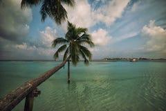 Μαλδίβες, εξωτικός προορισμός για τις διακοπές ή μήνας του μέλιτος, άσπρη παραλία κοραλλιών με τους φοίνικες στον παράδεισο στοκ εικόνα