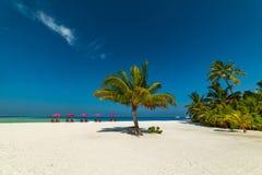 Μαλδίβες, εξωτικός προορισμός για τις διακοπές ή μήνας του μέλιτος, άσπρη παραλία κοραλλιών με τους φοίνικες στον παράδεισο στοκ φωτογραφία με δικαίωμα ελεύθερης χρήσης