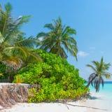 Μαλδίβες Οικολογική καταστροφή Στοκ Εικόνες
