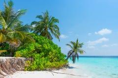 Μαλδίβες Οικολογική καταστροφή Στοκ Εικόνα