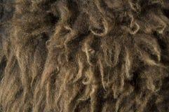 μαλλί ανασκόπησης Στοκ Εικόνες
