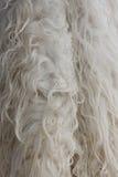μαλλί ανασκόπησης Στοκ φωτογραφίες με δικαίωμα ελεύθερης χρήσης
