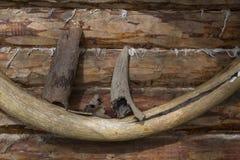 Μαμμούθ ελεφαντόδοντο και κέρατο ενός ταύρου στον τοίχο ενός αρχαίου ξύλινου πλαισίου στοκ εικόνες