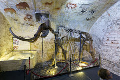 Μαμμούθ σκελετός στο μαμμούθ μουσείο της Βαρκελώνης Στοκ Εικόνα