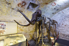 Μαμμούθ σκελετός στο μαμμούθ μουσείο της Βαρκελώνης Στοκ Φωτογραφίες
