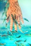 Μανικιούρ fish spa Στοκ εικόνα με δικαίωμα ελεύθερης χρήσης