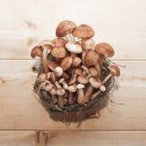 Μανιτάρια αγαρικών μελιού στη φωλιά & x28 basket& x29  στο ξύλινο υπόβαθρο Στοκ εικόνες με δικαίωμα ελεύθερης χρήσης