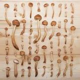 Μανιτάρια αγαρικών μελιού στο ξύλινο υπόβαθρο Στοκ Φωτογραφίες