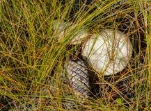 Μανιτάρια και ένα Pinecone στοκ εικόνα