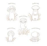 Μανιτάρια με τα λατινικά ονόματα, περίληψη διανυσματική απεικόνιση