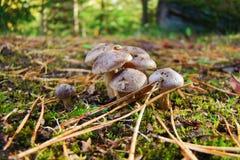 μανιτάρια μικρά Στοκ φωτογραφία με δικαίωμα ελεύθερης χρήσης