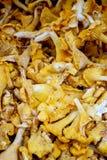 Μανιτάρια - οργανικά προϊόντα στην αγορά αγροτών Στοκ φωτογραφία με δικαίωμα ελεύθερης χρήσης