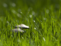 Μανιτάρια στην πράσινη χλόη Στοκ Φωτογραφίες