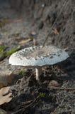 Μανιτάρια στο δάσος Στοκ Φωτογραφίες