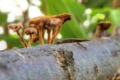 Μανιτάρια στο δέντρο πεύκων στο δάσος. Στοκ Φωτογραφία