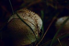 Μανιτάρια φθινοπώρου στοκ εικόνα