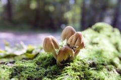 Μανιτάρια φθινοπώρου Στοκ Φωτογραφίες