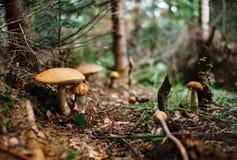 μανιτάρια Στοκ φωτογραφίες με δικαίωμα ελεύθερης χρήσης