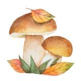 Μανιτάρια Watercolor με τα φύλλα φθινοπώρου Στοκ Φωτογραφία