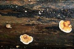 Μανιτάρι και σαλιγκάρι Στοκ εικόνες με δικαίωμα ελεύθερης χρήσης