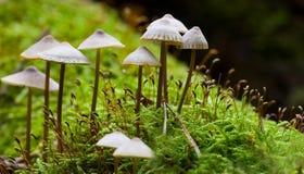 μανιτάρι μικροσκοπικό Στοκ εικόνες με δικαίωμα ελεύθερης χρήσης