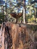 Μανιτάρι σε ένα νεκρό δέντρο Στοκ εικόνες με δικαίωμα ελεύθερης χρήσης