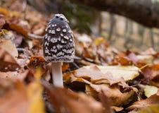 Μανιτάρι στο δάσος Στοκ Φωτογραφίες