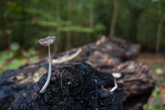 Μανιτάρι στο δάσος διακοσμούν με έναν ειδικό τρόπο την ατμόσφαιρα χωρών Στοκ εικόνα με δικαίωμα ελεύθερης χρήσης