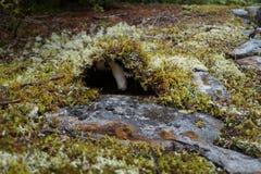 Μανιτάρι φθινοπώρου στο βρύο στοκ εικόνα με δικαίωμα ελεύθερης χρήσης