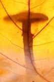Μανιτάρι Στοκ φωτογραφίες με δικαίωμα ελεύθερης χρήσης