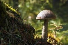 Μανιτάρι Στοκ φωτογραφία με δικαίωμα ελεύθερης χρήσης