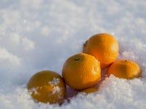 Μανταρίνια στο χιόνι Στοκ Φωτογραφίες